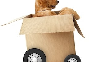 Pets and Removals