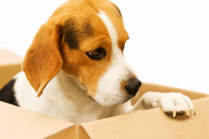 Top 11 Tips to Keep your Animals Safe When you Move House