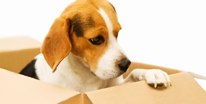 Revisiting the Subject of Pets and Removals