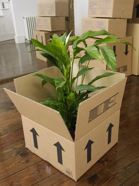 Moving Large Plants in Pots